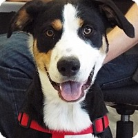 Adopt A Pet :: Callie - Grants Pass, OR