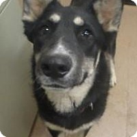 Adopt A Pet :: Athena #160224 - Apple Valley, CA