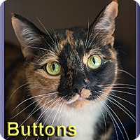 Adopt A Pet :: Buttons - Aldie, VA