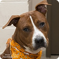 Adopt A Pet :: Rollo - Troy, OH
