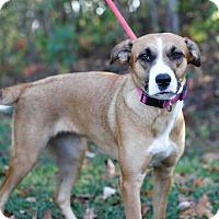 Adopt A Pet :: Cassie - Rochester, NH