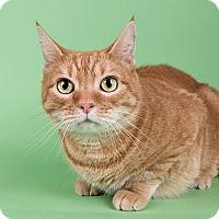 Adopt A Pet :: Marmalade - Wilmington, DE