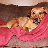 Adopt A Pet :: Bella Harper - Breaux Bridge, LA