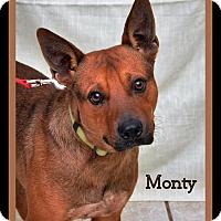 Adopt A Pet :: Monty - DuQuoin, IL
