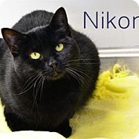 Adopt A Pet :: Nikomi - Hamilton, MT
