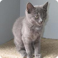 Adopt A Pet :: Morgan - Covington, KY