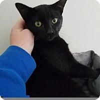 Adopt A Pet :: BINX - Burlington, NC