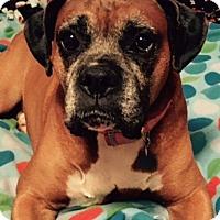 Adopt A Pet :: Harvey - Woodbury, MN