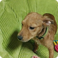 Adopt A Pet :: Bridget - Forest Hill, MD