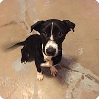 Adopt A Pet :: Lester - Traverse City, MI