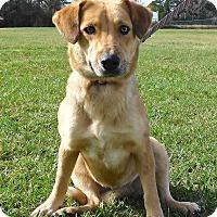 Adopt A Pet :: Marney - St. Francisville, LA