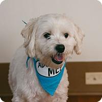 Adopt A Pet :: Sir Fur - Pacific Grove, CA