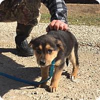 Adopt A Pet :: Dovey - Harrisonburg, VA