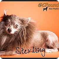 Adopt A Pet :: Sterling - Orange, CA