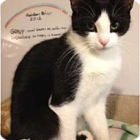 Adopt A Pet :: Hannah - Middletown, CT