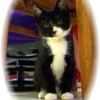 Adopt A Pet :: Bart - Shelton, WA