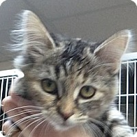 Adopt A Pet :: Juicy Lucy - St. Petersburg, FL