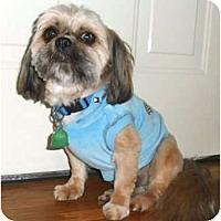Adopt A Pet :: Josh - Mooy, AL