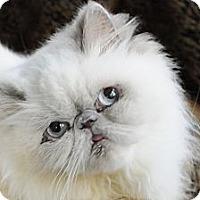 Adopt A Pet :: Precious Mama - Columbus, OH