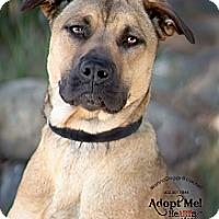 Adopt A Pet :: darby - Phoenix, AZ