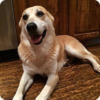 Adopt A Pet :: Parker - McKinney, TX