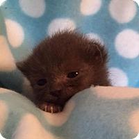 Adopt A Pet :: Trouble - Union, KY