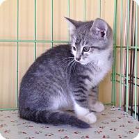 Adopt A Pet :: Molly - Island Park, NY