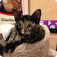 Adopt A Pet :: MacKenzie - Foothill Ranch, CA