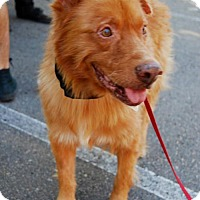 Adopt A Pet :: Spunky - San Diego, CA