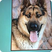 Adopt A Pet :: HEINZ VON HEIDENAU. - Los Angeles, CA