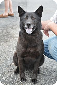 Shepherd (Unknown Type) Mix Dog for adoption in Hopkinsville, Kentucky - Lizzie