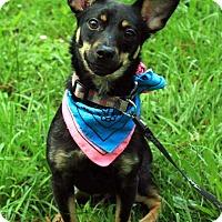 Adopt A Pet :: Lido - Virginia Beach, VA