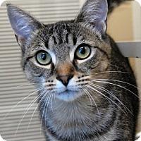Adopt A Pet :: Tonks - Newland, NC
