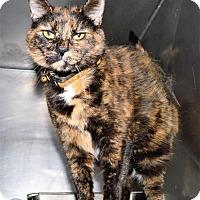Adopt A Pet :: Jaina - San Jacinto, CA
