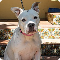 Adopt A Pet :: Petunia - Los Angeles, CA
