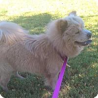 Adopt A Pet :: Frankie - Mansfield, TX