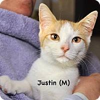Adopt A Pet :: Justin - West Orange, NJ