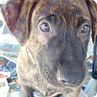 Adopt A Pet :: Macky - San Diego, CA