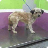 Adopt A Pet :: A1426826 - Houston, TX