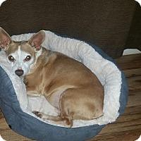 Adopt A Pet :: Phantom - Battleboro, VT