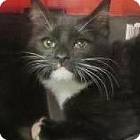 Adopt A Pet :: Jessie $20 - Lincolnton, NC