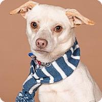 Adopt A Pet :: Mitchel - Northbrook, IL