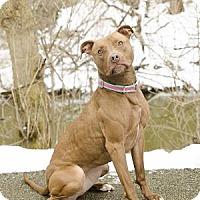Adopt A Pet :: Cashew - Adrian, MI