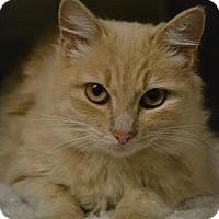 Adopt A Pet :: Echo - Austin, TX