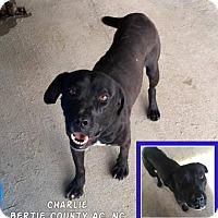 Adopt A Pet :: Charlie - Powellsville, NC