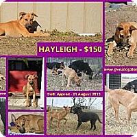 Adopt A Pet :: HAYLEIGH - Devine, TX