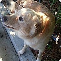 Adopt A Pet :: Howie - Jacksonville, FL