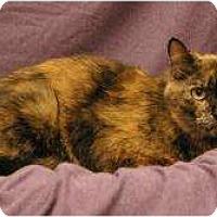 Adopt A Pet :: Victoria - Sacramento, CA