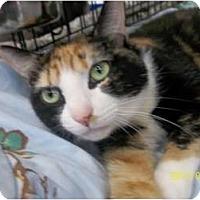 Adopt A Pet :: Madeline - Riverside, RI