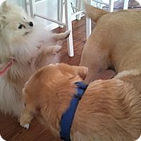 Adopt A Pet :: WINTER - Encino, CA
